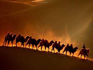 巴丹吉林-大漠驼影