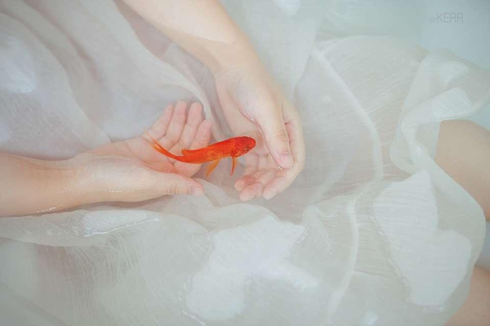 让我的思绪就像浴缸中的红金鱼自游自在