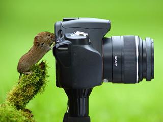宠物也会玩摄影