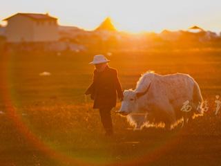 一场说走就走的旅行 2015青海甘肃暑期西游记