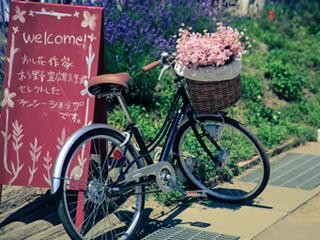 玩转小清新 回忆北海道的夏天