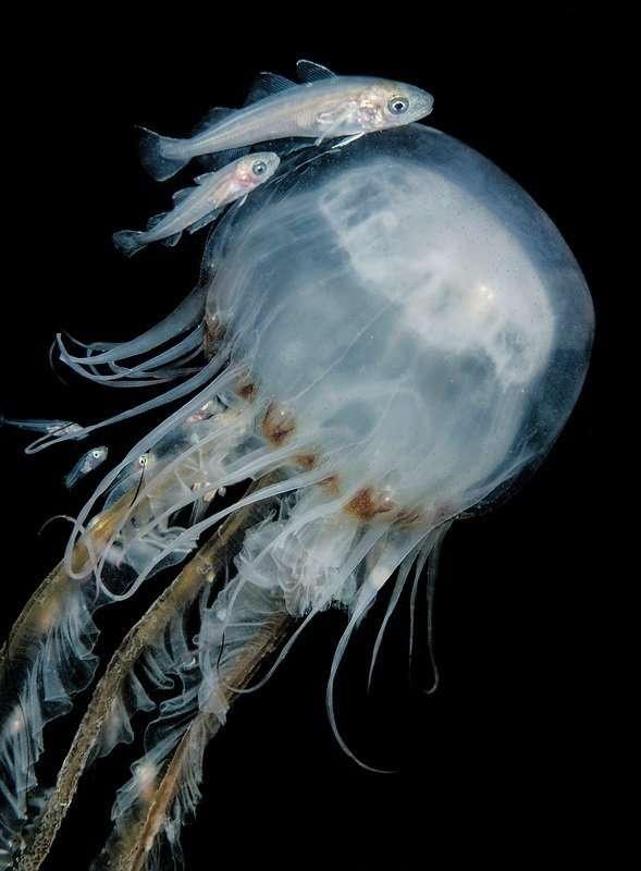 2016水下摄影大赛获奖作品专辑