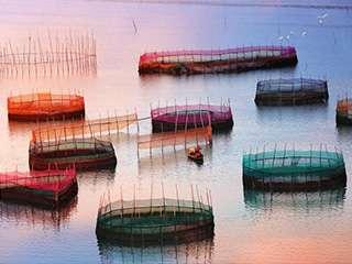 壮观的霞浦海上围网养殖场
