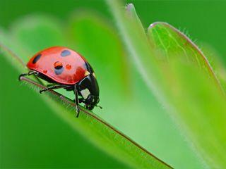 昆虫摄影攻略