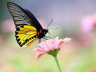 了解生态摄影及生态审美自觉之维