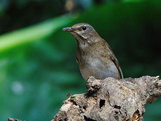 野生鸟类摄影的经验分享