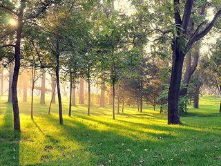 如何利用光与影的关系来构成影像和影调