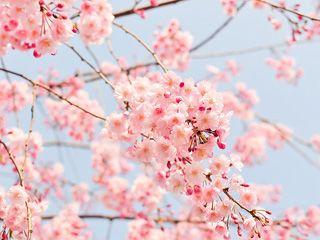 春天拍花摄影技巧全攻略
