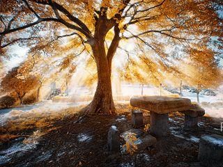"PS后期打造柔和光线穿越林间""丁达"