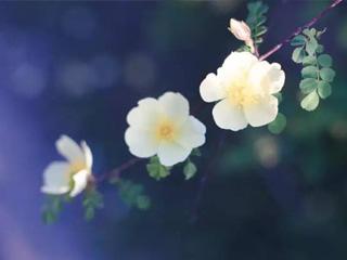 【蚂蚁原创】怎样把普通花卉拍出大片效果