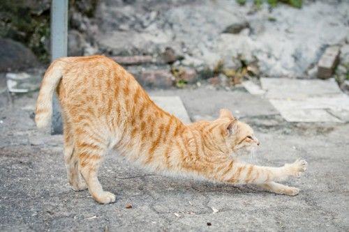 猫猫拍摄入门技巧