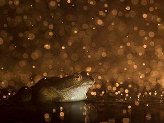 2015年度BWPA英国野生动物摄影大赛