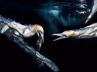 《Scuba Diving》摄影大赛获奖照片背后